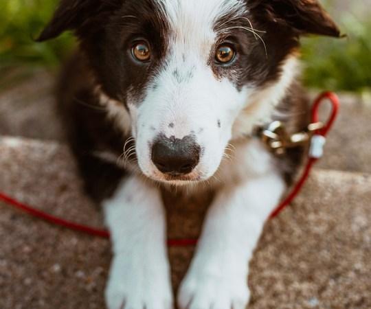 Saabus selgus: Lapimaal maha lastud koer oli hukatud seaduspäraselt