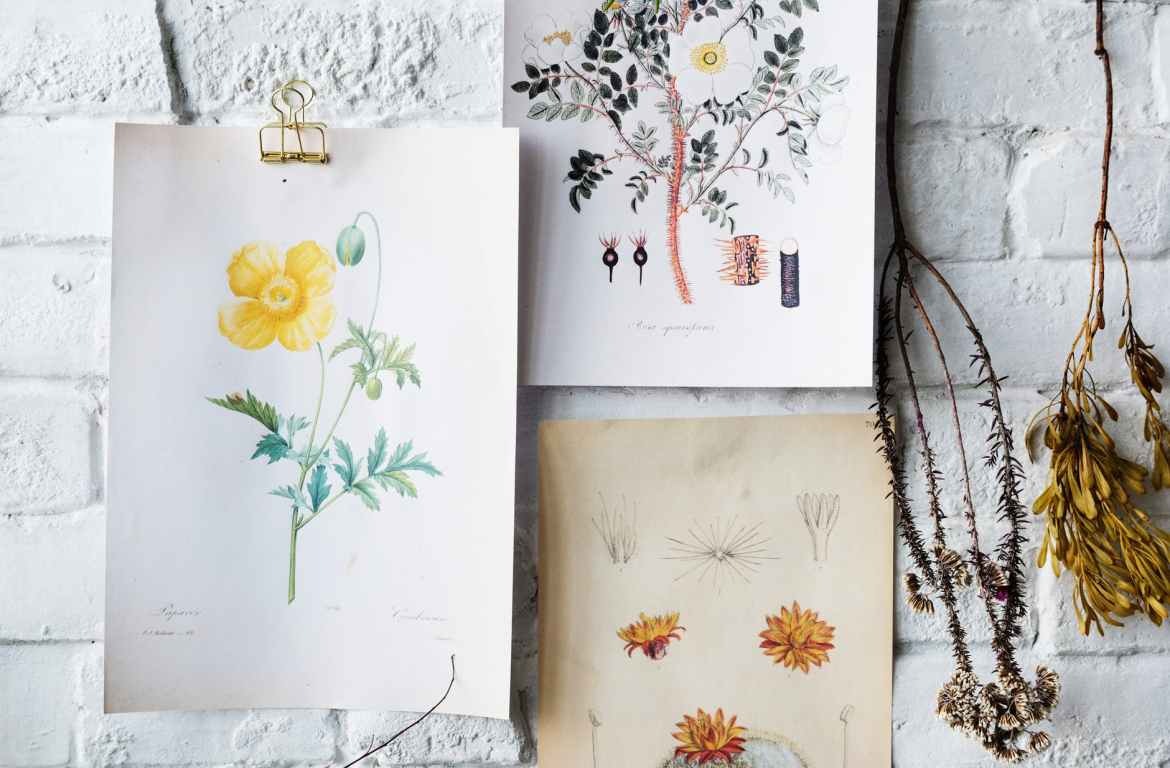 flowers sketches on white brick wall