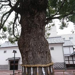 金陵の敷地内にある大木