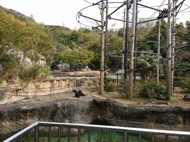のいち動物公園のゴリラ