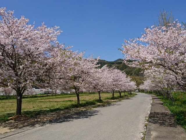 宮の前公園の桜吹雪