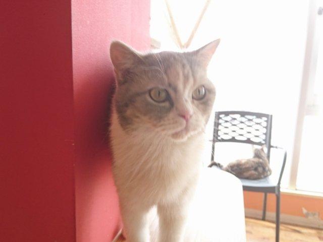 夢猫の猫さんはかわいい
