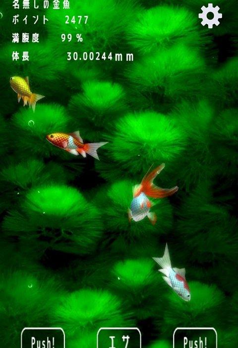 金魚ドリーム1