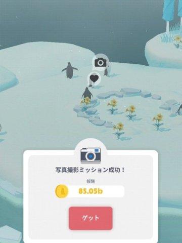 ペンギンの島:写真撮影