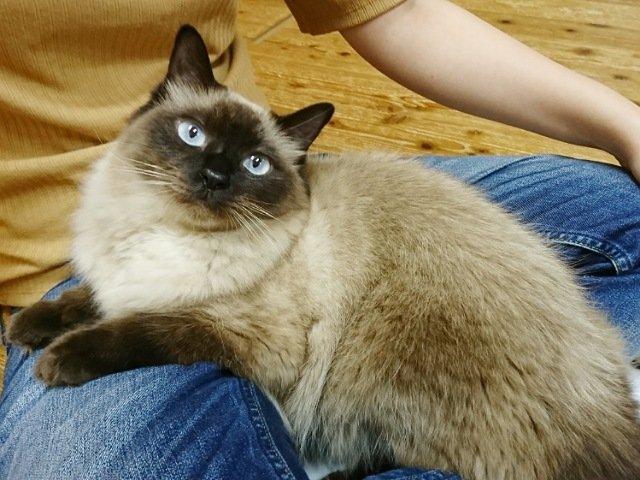 ネコカフェ猫nova:猫3