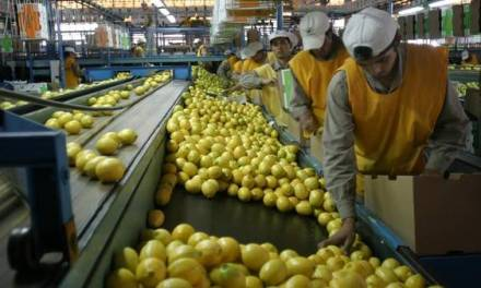 Europe prohibits the entry of Argentine citrus