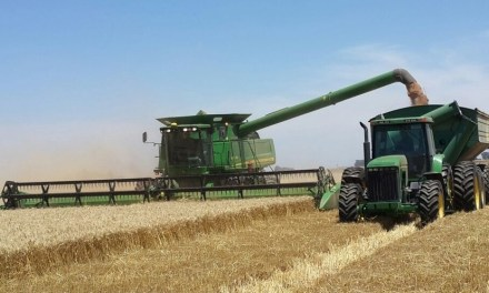 Argentina on track for a super wheat harvest