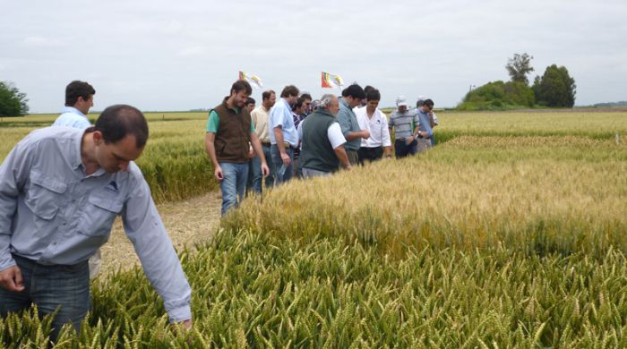 """Casanova and Lanusse from Agrifex: """"Seed industry is an excellent niche for M&A"""""""