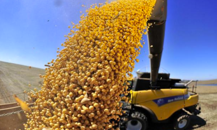 Friendly fire: one million soybean tons registered to export in October