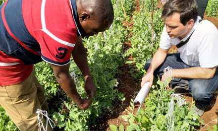 Rizobacter helps African farmers to enhance their soybean crops via the inoculation