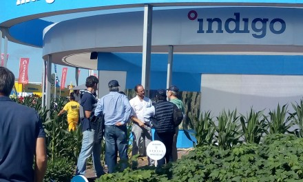 10, 100, 300K: the Indigo's growth path in Argentina