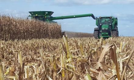 Corn: between Argentina and Brazil take 40% of the international market