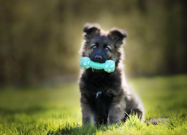 El Condroprotector para cachorros MSM Barakaldo Plus es perfecto.