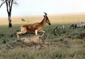 Gacela, cebras y otros animales en la sabana