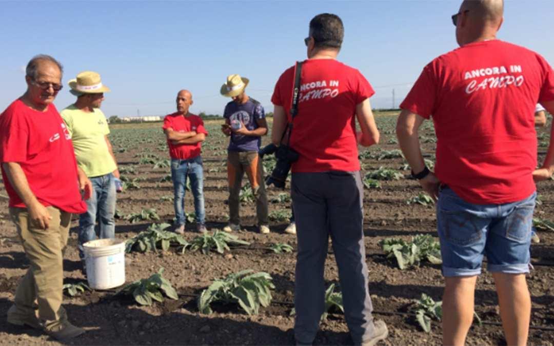 Το EFFAT και το FLAI καταπολεμούν τις υποπληρωμές και τους κυρίους συμμοριών στη γεωργία