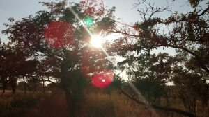 Light through trees in Zimbabwe