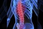 Colonne vertébrale en santé