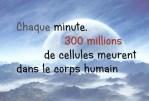 Saviez-vous que...Chaque minute, 300 millions de cellules meurent dans le corps humain