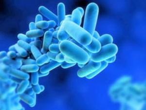 les virus et les bactéries, virus dangereux,  bactéries dangereuses
