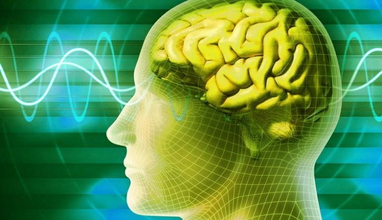 le cerveau, notre cerveau
