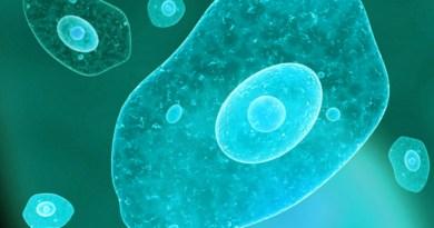 Microbes dans l'eau, des microbes dangereux dans l'eau potable