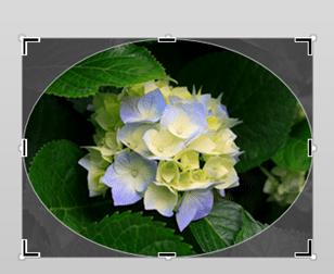 flower Crop to shape 2
