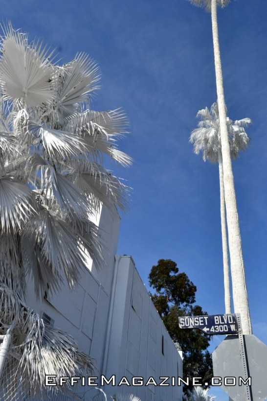EffieMag.com Photo of Projection L.A. Installation