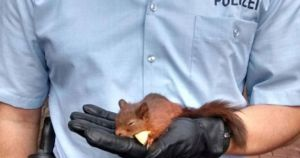 Police in Germany arrest a squirrel for stalking a woman (Photo)
