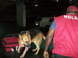 NDLEA nabs security man, students with cocaine in Abia