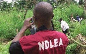 NDLEA arrests Ghanaian for drug peddling in Katsina state