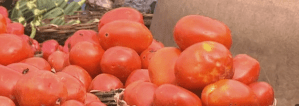 Prices of tomatoes in Nigeria soar by 700% (Video)