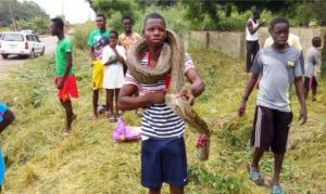 Ghanaian man shows off the huge snake he killed (Photos)