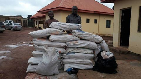 , Dismissed DSS official nabbed with sixteen bags of weed in Enugu. Photos, Effiezy - Top Nigerian News & Entertainment Website