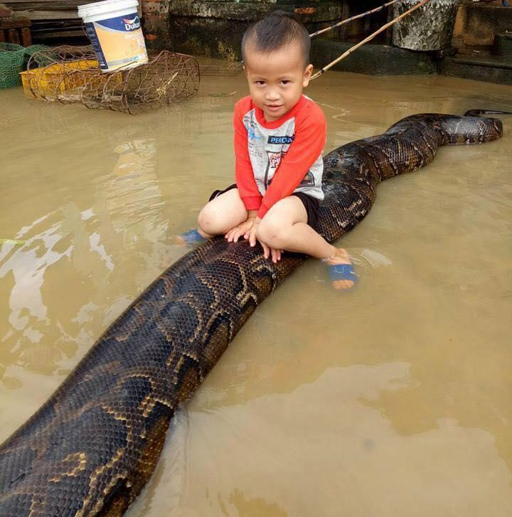 , Unbelievable: 3-year-old Boy Caught Riding a Massive 20-ft Python in the Water During Floods, Effiezy - Top Nigerian News & Entertainment Website