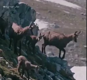 Check out the video Nat Geo Wild apparently paid $1million for (Video)
