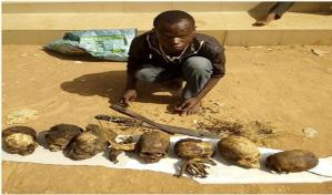 , Herbalist arrested with 7 human skulls in Kwara State (Photo), Effiezy - Top Nigerian News & Entertainment Website