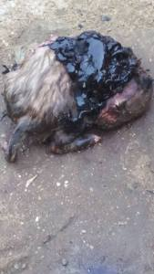 Nigerian woman gives birth to a dog in Akwa-Ibom State (Photos)