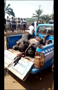 Bus Somersaults In Enugu While Avoiding Hilux, 6 Burnt (Graphic Photos)