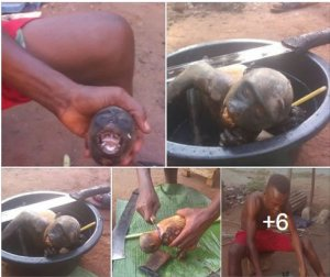 Nigerian Man Shares Photo Of Monkey That He Killed In Rivers State (Graphic Photos)