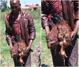 Man 'rapes' 2 chickens to death (Photo)