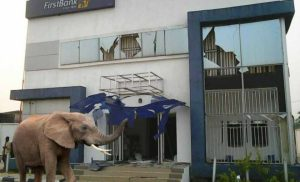 Mysterious Elephant Steals N125million From First Bank Nigeria (Photos)