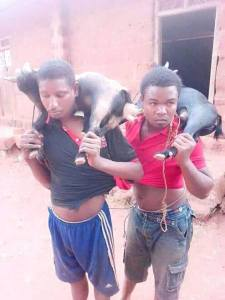 2 Young Men Caught Stealing Goats In Nsukka. (Photos)