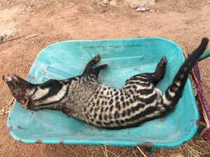 See the animal this female soldier caught in her farm (Photos)