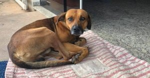Loyal dog waits outside hospital four months after owner dies