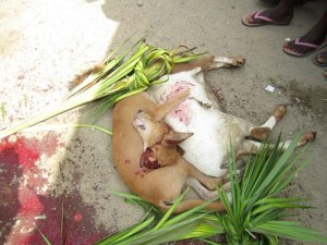 Dog Killed And Beheaded At The Burial Of A Popular Man In Rivers State (Graphic Photos)