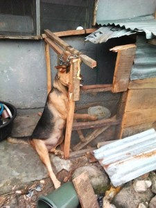 See The Way Armed Robbers Tied A Dog For Barking As They Tried Robbing (Photos)