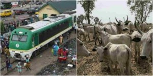 Train Crushes 52 Cows To Death In Kaduna – Police