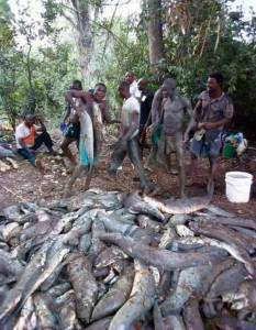 See The Big Fishes Caught During Flood In Bayelsa (Photo)