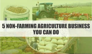 See 5 Non-farming Agriculture Business You Can Do
