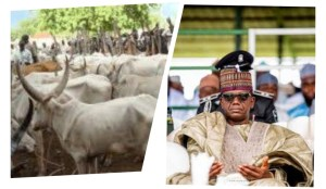 Eid-el-Kabir: Zamfara Govt. distributes over 5,000 rams, 993 cows as palliatives.